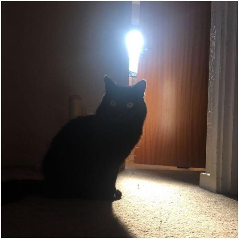 """""""Муур минь сайхан санаа олсон бололтой шүү."""""""