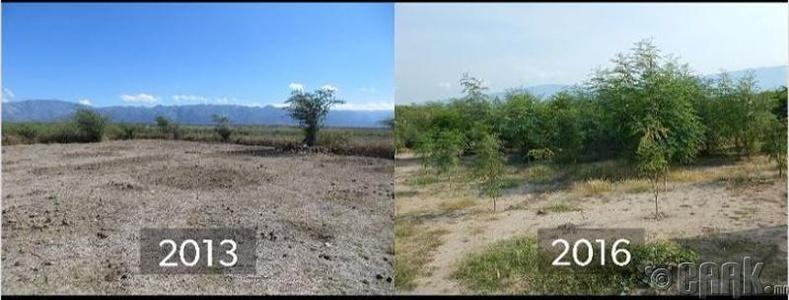 Гайти цөлжиж эхэлсэн ч тэнд мод ургуулж болохыг хүмүүс баталжээ