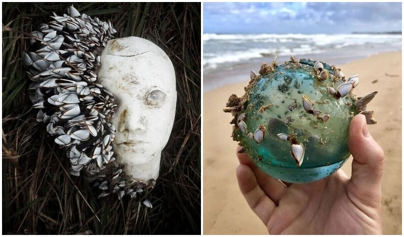Хүмүүсийн далайн эргээс олсон гайхалтай зүйлс (25 фото)
