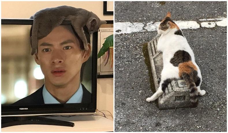 """Муур бол төрөлхийн """"боссууд"""" гэдгийг батлах хөгжилтэй 40 зураг"""