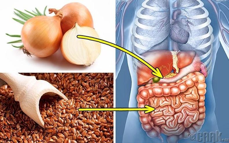 Хоол боловсруулах эрхтэний тогтолцоо
