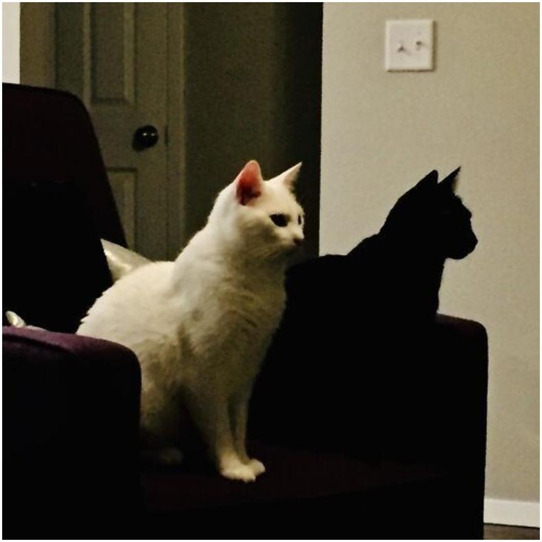 """""""Хар муур маань цагаан муурны сүүдэр шиг л харагдаж байна."""""""