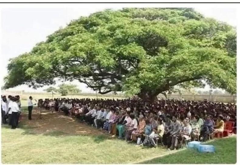 Моддын ивээл мундашгүй их. 200 хүнийг сүүдэртээ өлхөн багтаажээ.