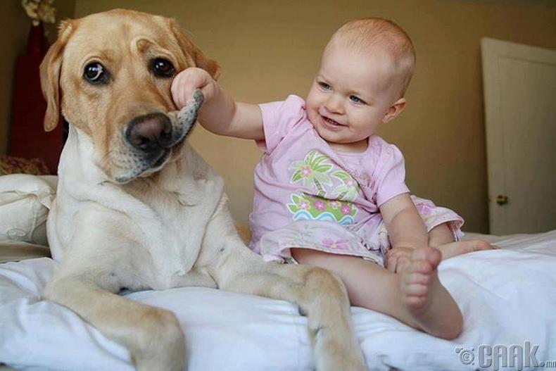 Би нохой тэжээмээр байна...?