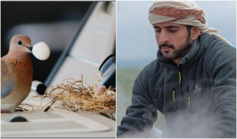 """Машин дээр нь үүрээ засч, өндөглөсөн шувуунд Дубайн ханхүү унаагаа """"бэлэглэжээ"""""""