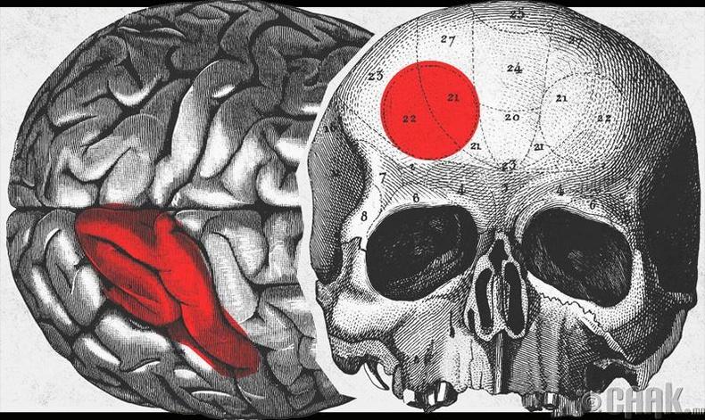 Бид бодохдоо: Хүн тархиныхаа дөнгөж 10 хувийг л ашигладаг