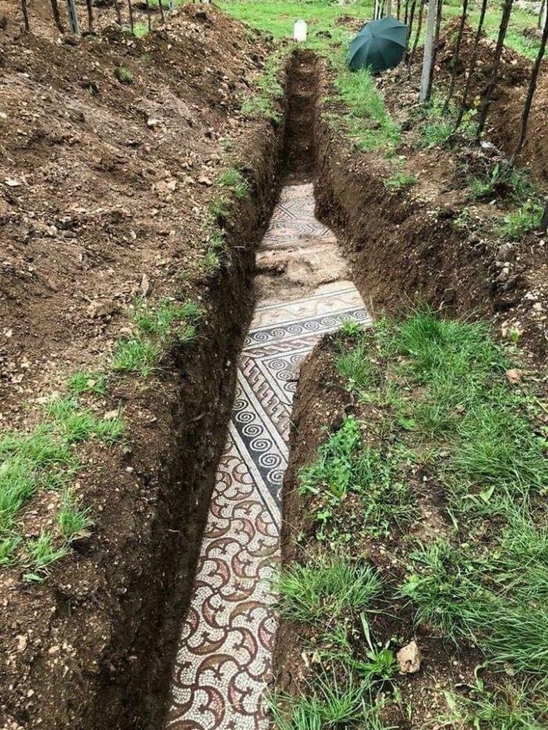 Италийн Неграр дахь усан үзмийн тариалангийн талбай доороос Ромын шигтгэмэл шал олжээ