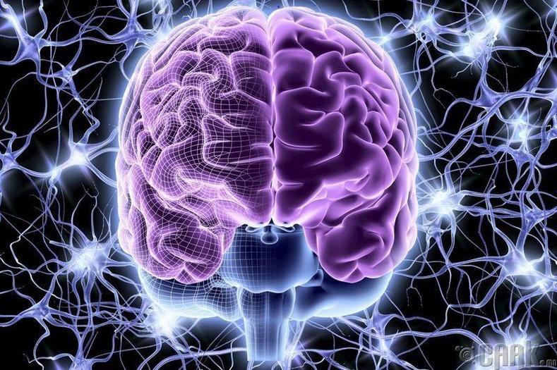 Хэзээ мэдрэлийн эс дахин сэргээгддэг вэ?