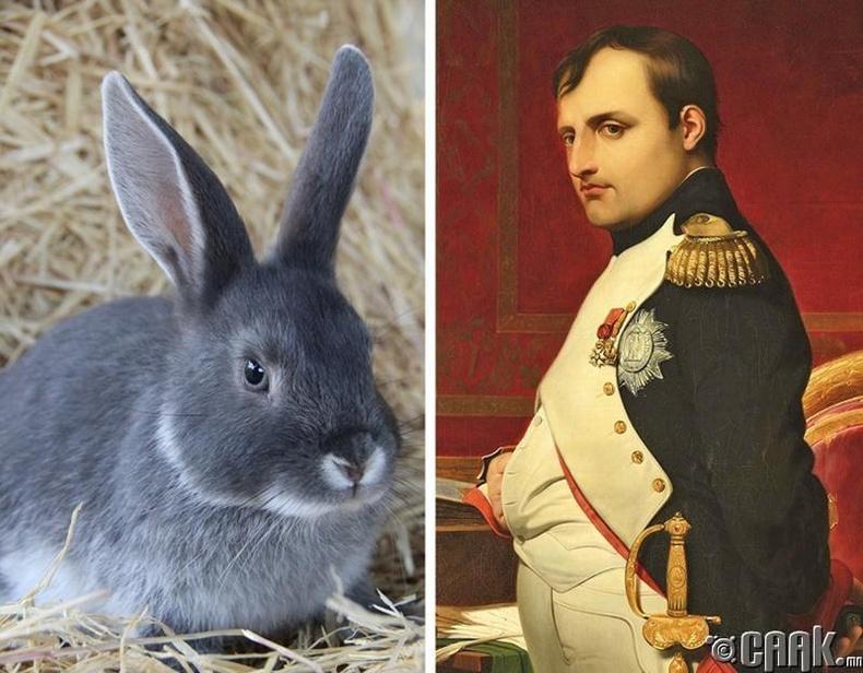 Наполеон Бонапарт туулайнаас айдаг
