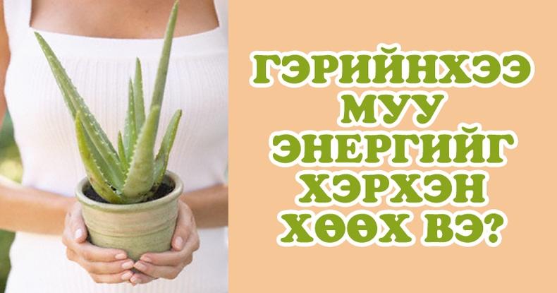 Таны гэрт эерэг энерги, баяр баясал авчрах 4 төрлийн цэцэг