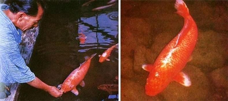 226 насалсан Кой загас 1977 онд үхсэн