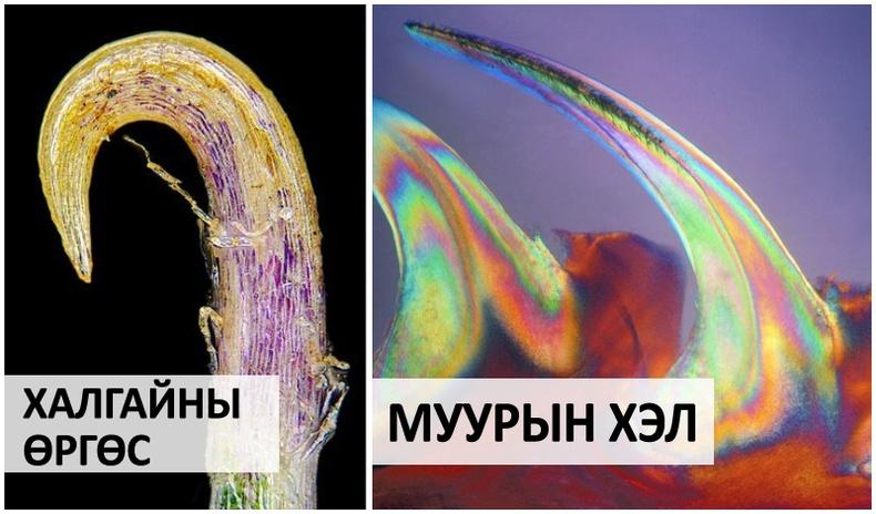 Микроскопын дуранд буусан итгэмээргүй дүр зургууд (16 фото)