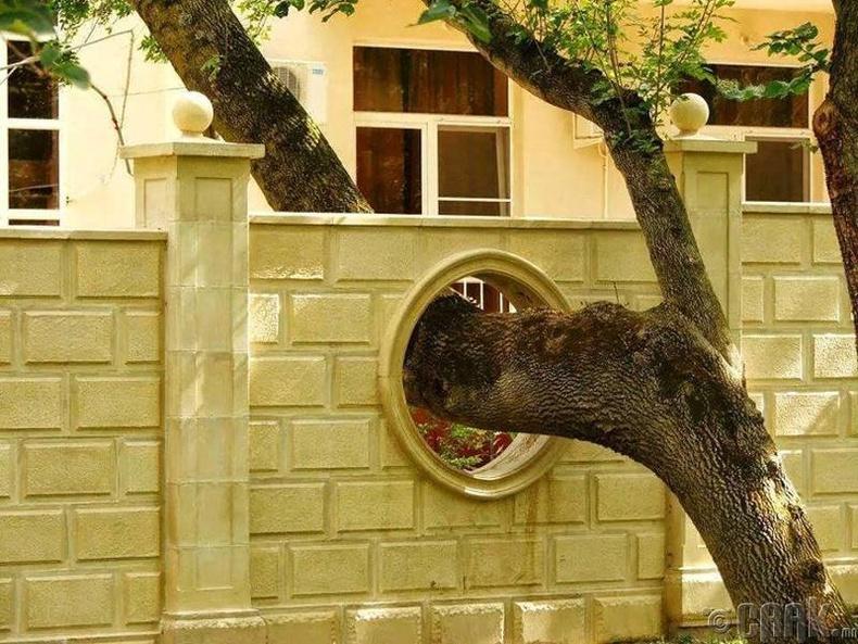 Хана барихын тулд мод тайрах хэрэггүйн жишээ.