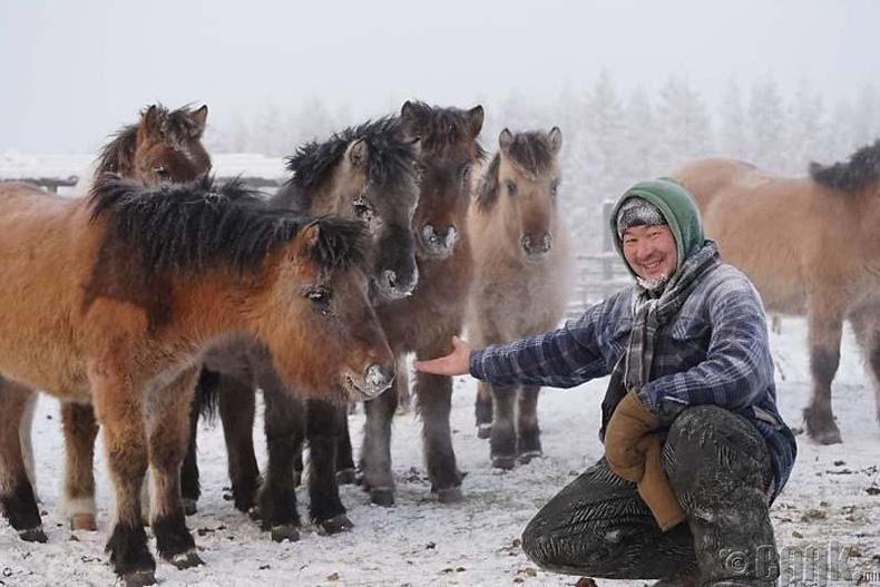 Морьдынхоо цасыг ч цэвэрлэдэг