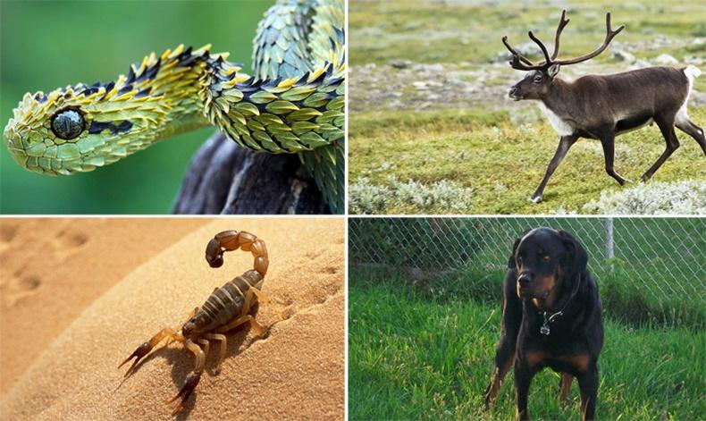 Хамгийн олон хүнийг үхэлд хүргэсэн 15 амьтан