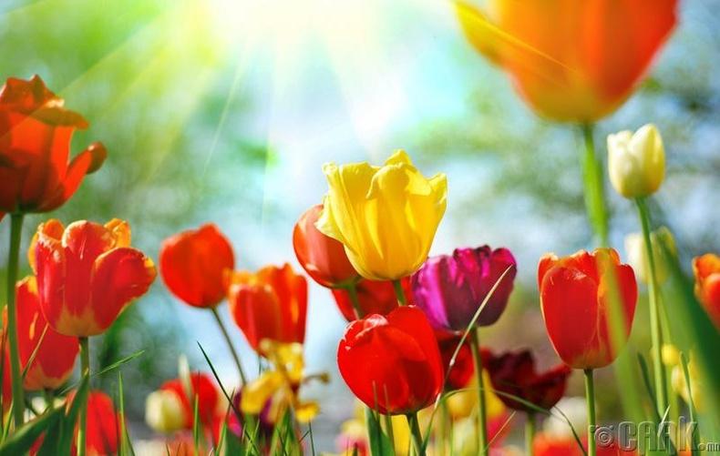 Цэцэгнээс айх