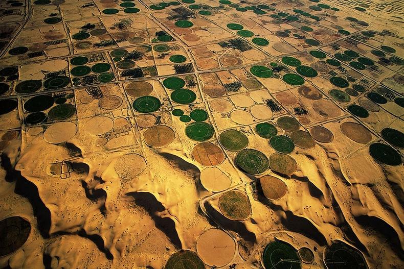 Цөлийн баянбүрд, тариалангийн талбайнууд - Алжир