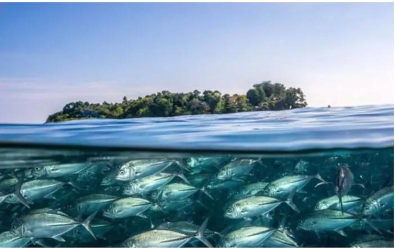 Усан доорх сүрэг загас