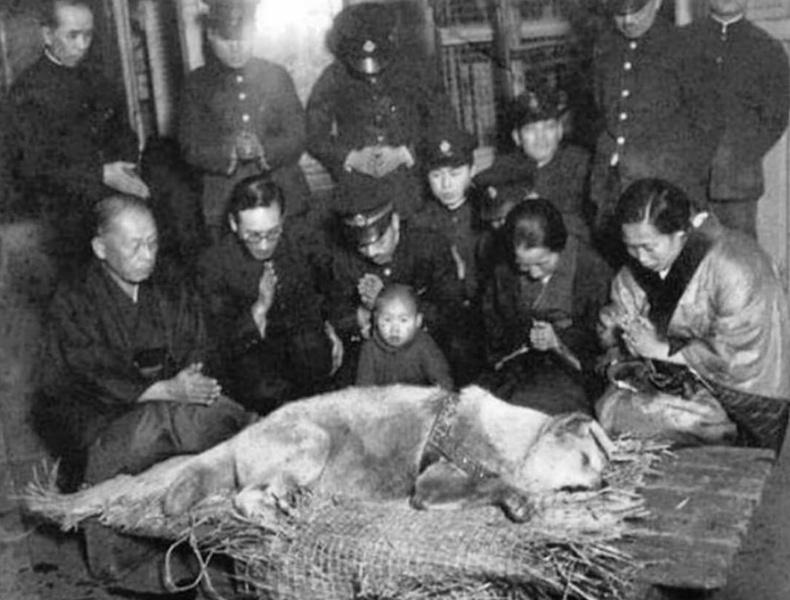 Үхэн үхтлээ эзнээ хүлээсэн Хачико нохойн хамгийн сүүлийн зураг (1935 он)