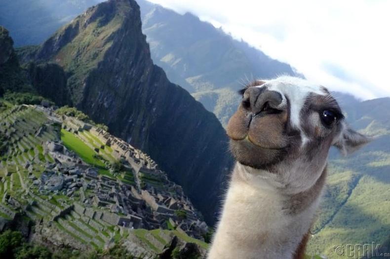 """""""Инка Трэйл"""" - Перу"""