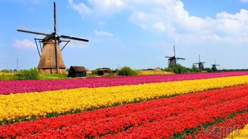 Голланд - IQ түвшин 103