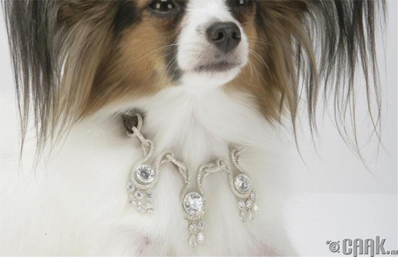 Нохойны хүзүүвч – 3.2 сая ам.доллар
