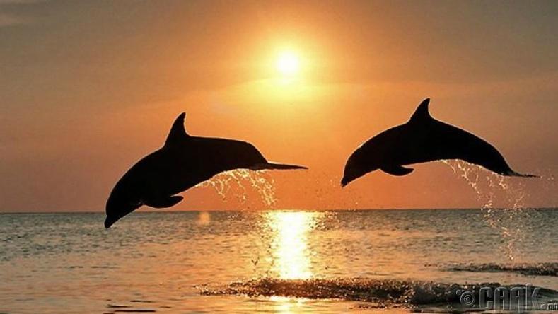 Дельфин сексийн маш идэвхтэй амьтад