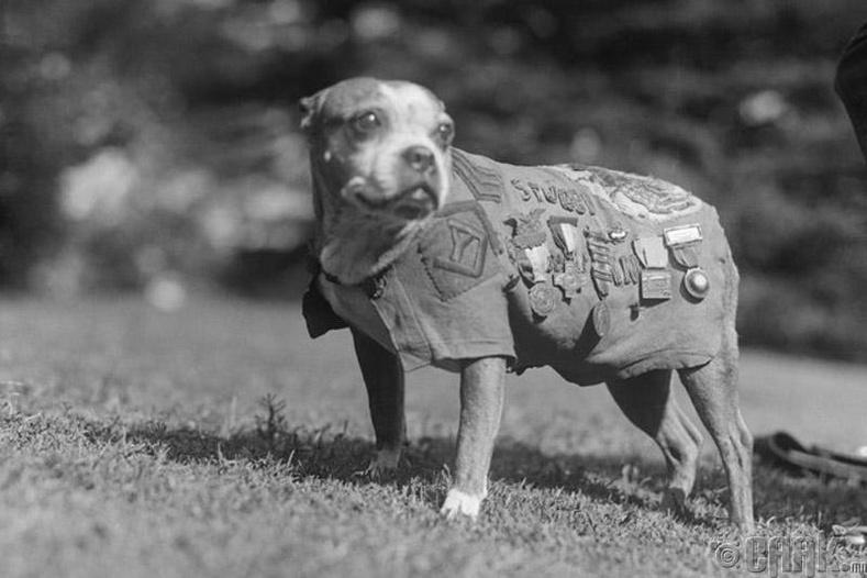 Түрүүч Стубби: Дэлхийн 2-р дайны ахмад дайчин