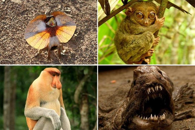 Эрдэмтдийн илрүүлсэн хачирхалтай амьтад