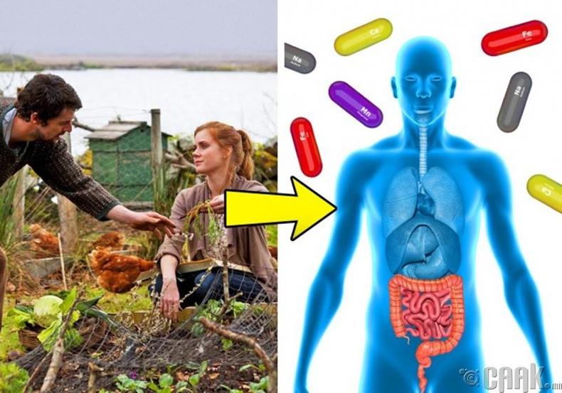 Органик хоол хүнс