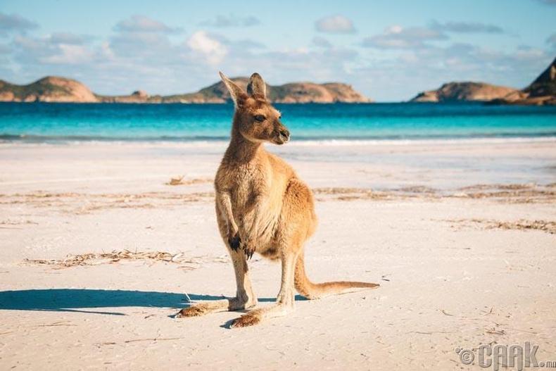 Австрали тив бидэнтэй ойртсоор байна