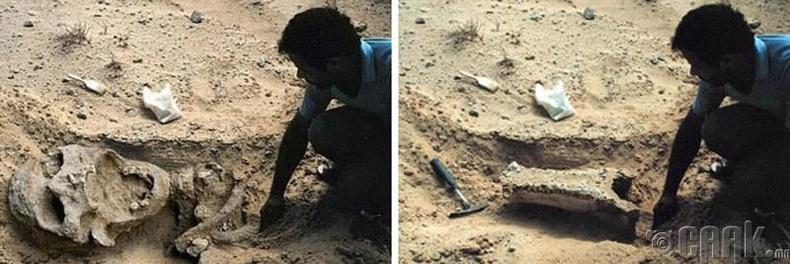Африкийн гүнээс олдсон аварга хүний араг яс гэж үнэндээ жижиг авдарны зураг байжээ