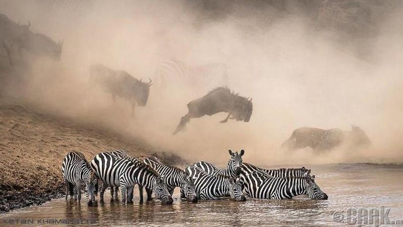 Кенийн зэрлэг байгаль - Гэрэл зурагчин Кетан Хамбата (Ketan Khambhatta)