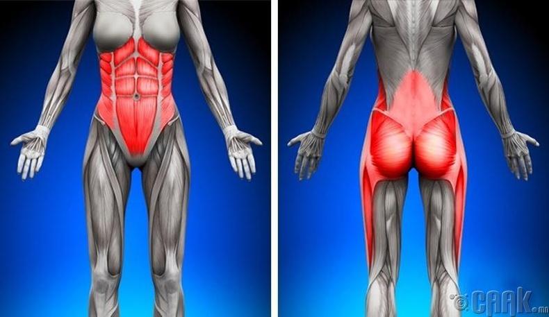Хэвлий болон гуяны булчинг чангална