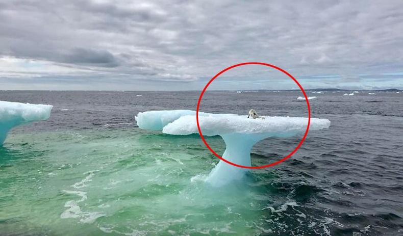 Далай дундах мөсөн дээр гацсан бяцхан амьтныг загасчид олж аварчээ