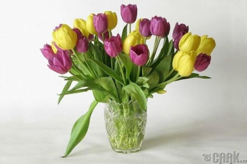 Цэцэг арчлах