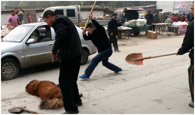 Хятад улсад амьдрах хэрэггүй 5 шалтгаан
