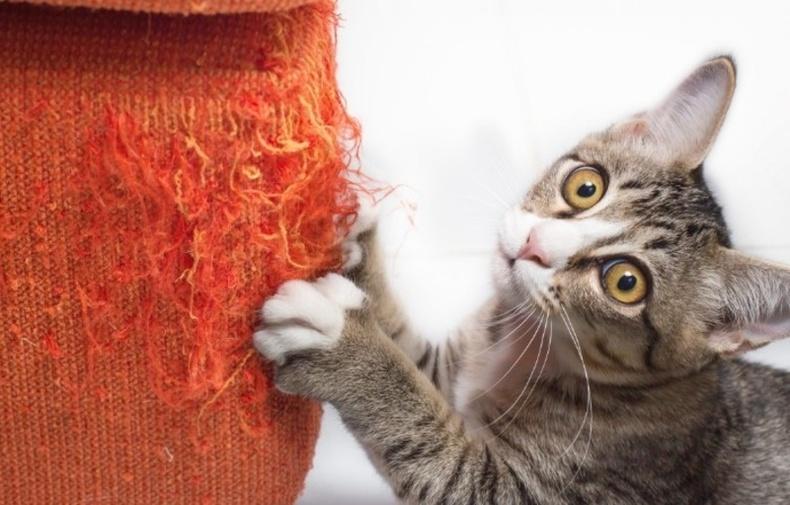 Муурыг тавилга сүйтгэхийг нь болиулах