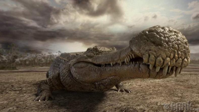 Саркочус (Sarcosuchus)