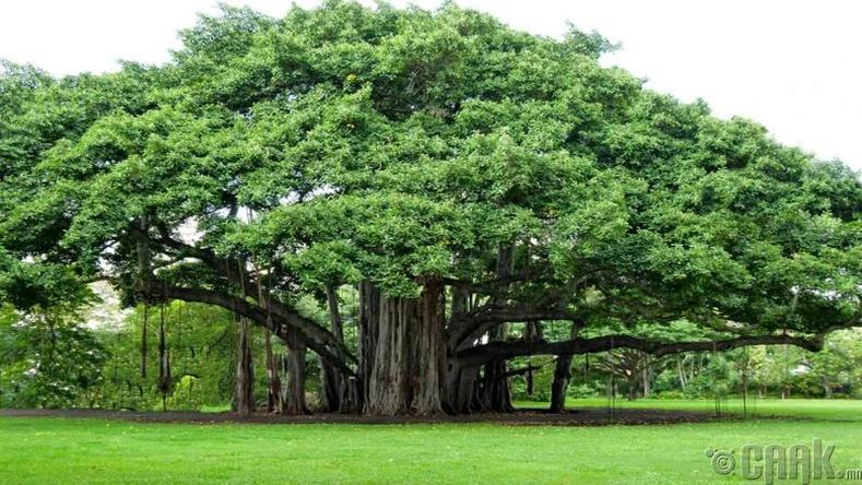 Мод - 4 болон 5