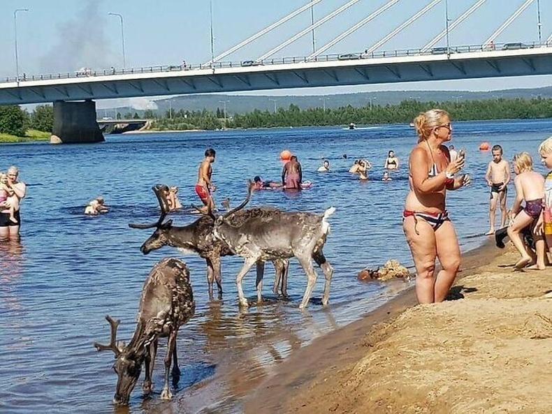 Финландад цаг агаар 25 хэм давах үед