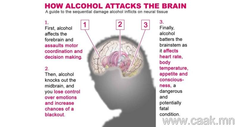 Алкохол таны тархины эсийг сүйтгэнэ.
