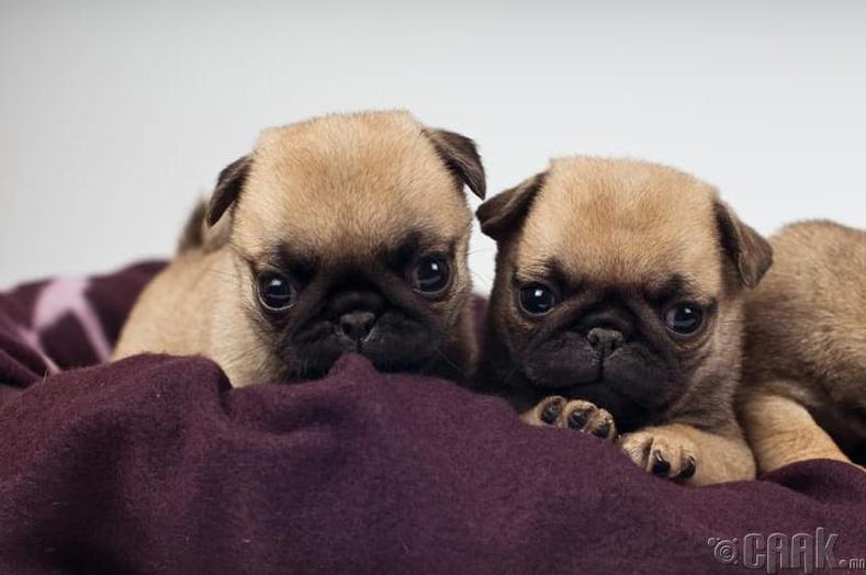 Харри (Harry) болон Сэлли (Sally) - Нохой