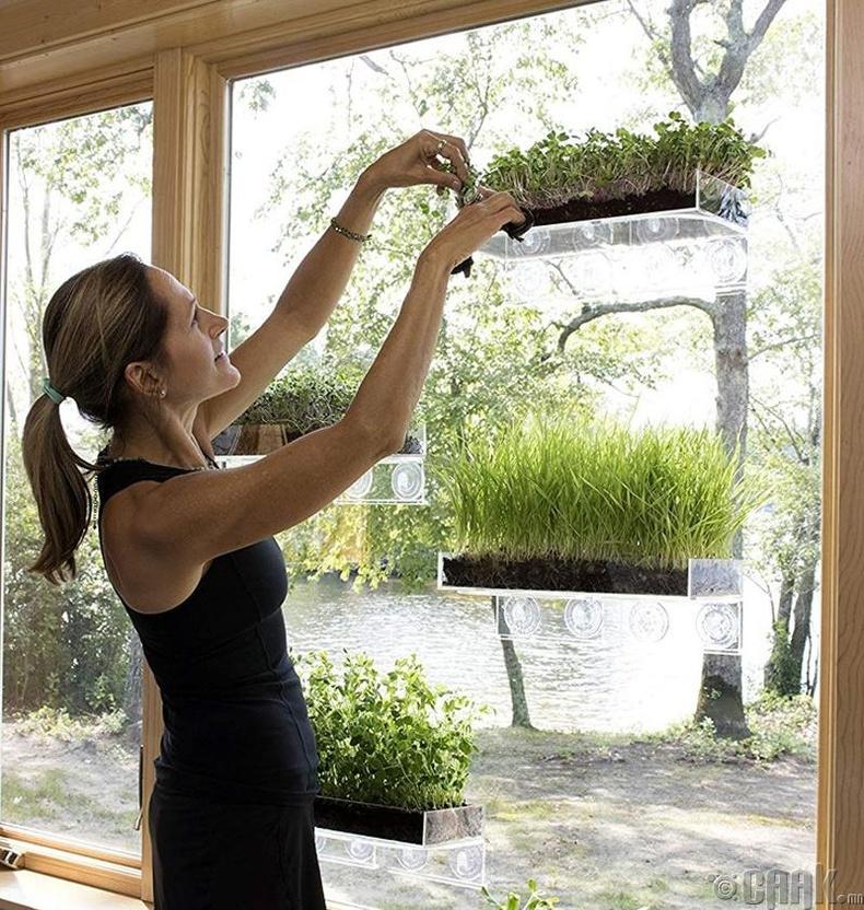 Өрөөнийхөө цонхыг ашиглаад жижиг цэцэрлэгтэй болоорой.