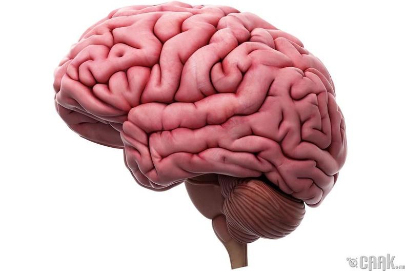 Нас барсных нь дараа тархи нь хулгайлагдсан