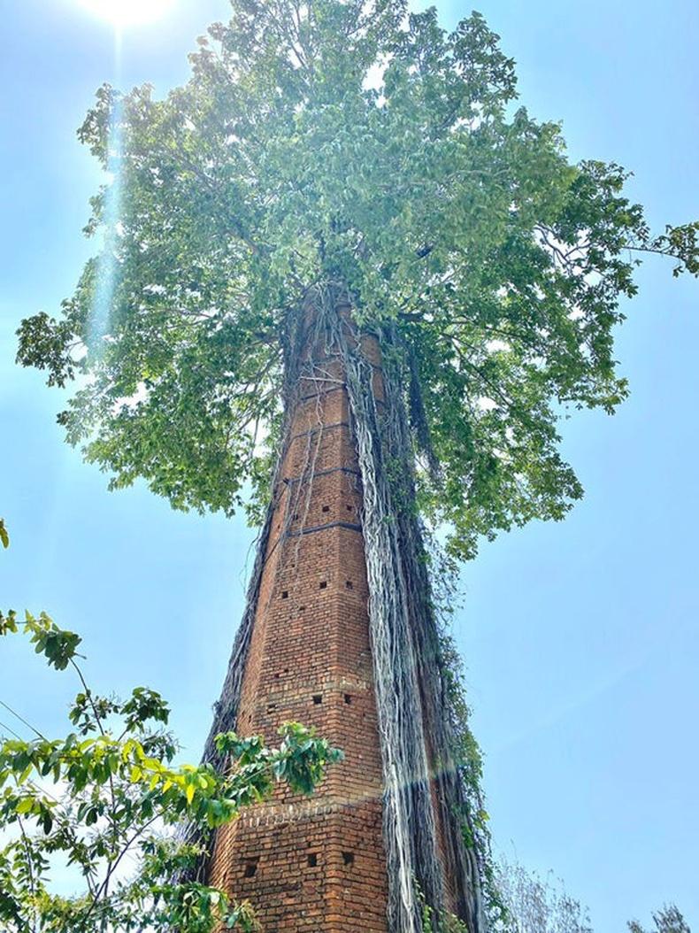 Хаягдсан янданг ороон ургасан мод