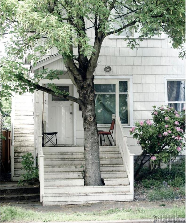 Модыг тойруулж барих хэрэгтэй
