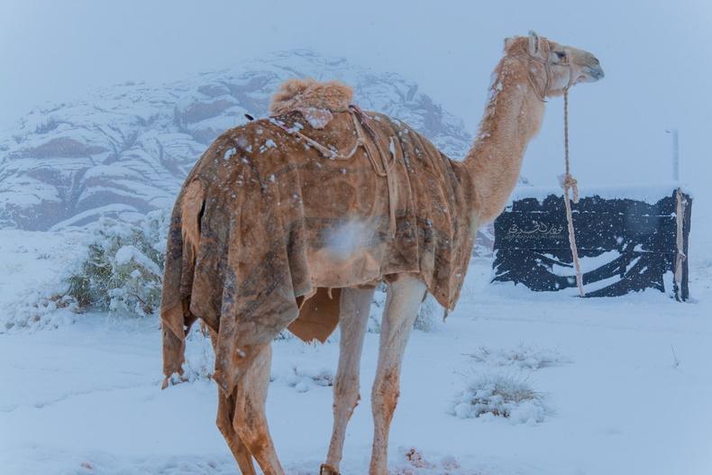 """""""Онцгой үзэгдэл"""" - Сахарын цөл, Саудын Араб цас мөсөөр хучигджээ (20 фото)"""