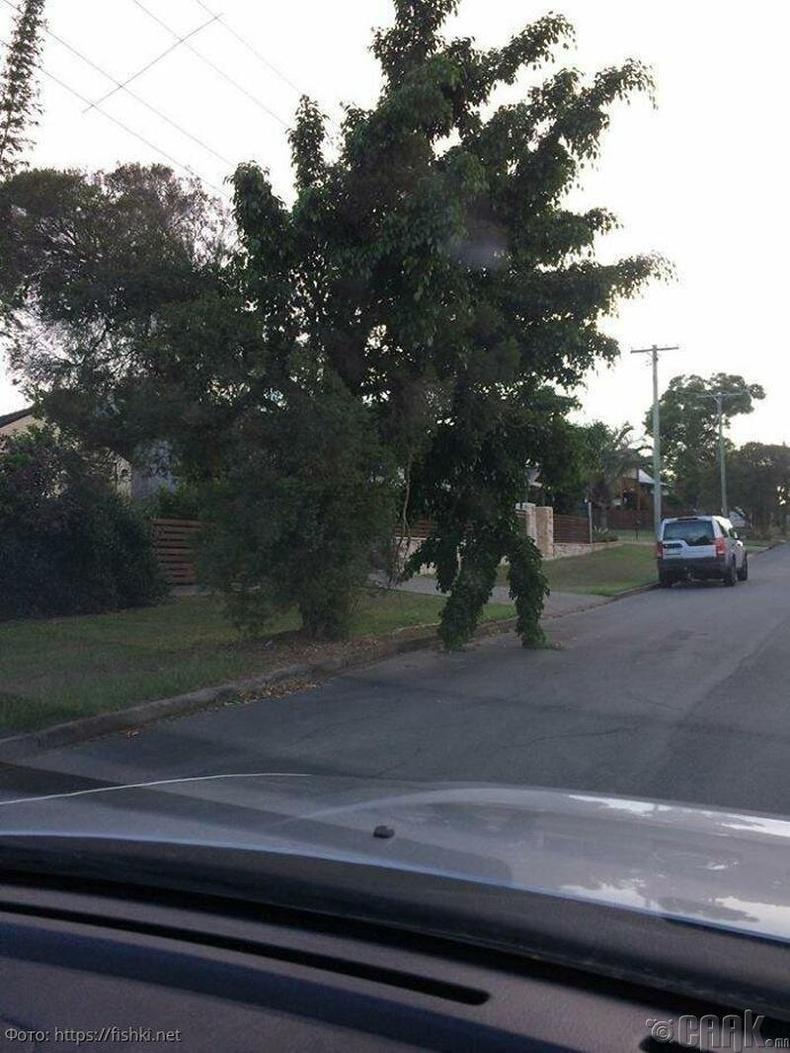 Зам хөндлөн гарахаар шийдсэн мод