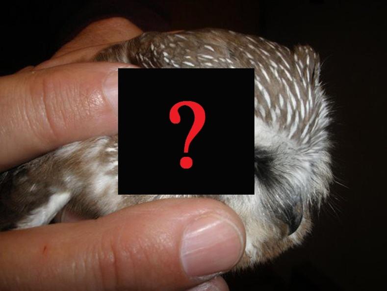 Шар шувууны чихэнд юу байдаг вэ?